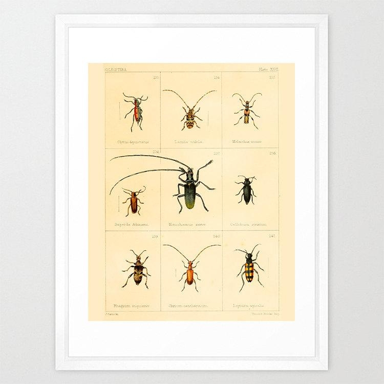 Insect Poster Bug Poster Antique Insect Print Insect Art Throughout Insect Wall Art (View 14 of 20)