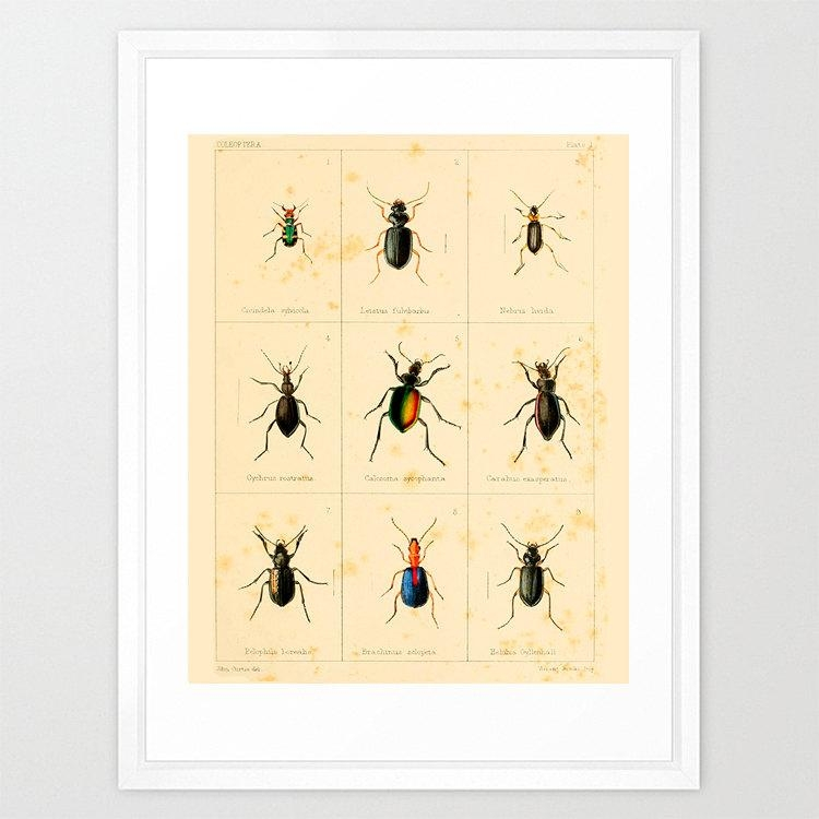 Insect Poster Bug Poster Antique Insect Print Insect Art With Regard To Insect Wall Art (View 3 of 20)