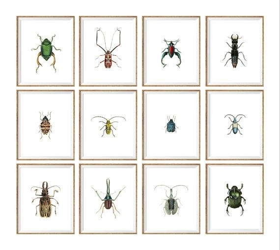 Insect Taxidermy Art Print Set Of (View 1 of 20)
