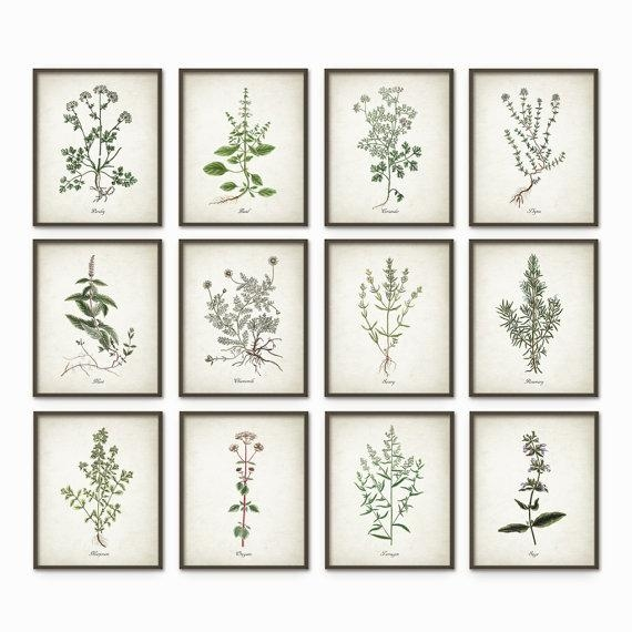 Kitchen Herbs Wall Art Print Set Of 12 Vintage Botanical Inside Wall Art Print Sets (View 1 of 20)