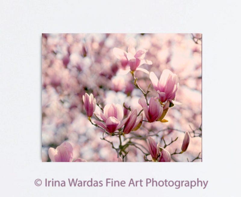 Magnolia Flower Canvas Photography | Red Burgundy Peach Wall Decor With Burgundy Wall Art (Image 17 of 20)
