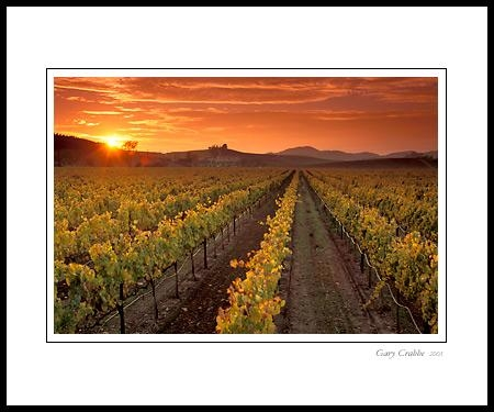 Photo: Golden Sunset Over Vineyard In The Carneros Region, Napa Pertaining To Vineyard Wall Art (Image 9 of 20)
