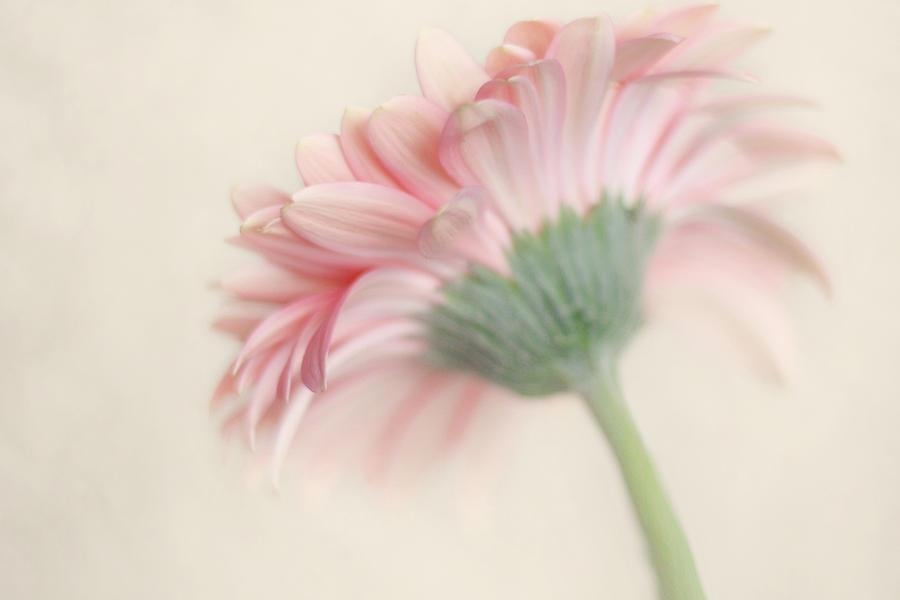 Pink Flower Photography – Pink Nursery Wall Art – Baby Girl For Pink Flower Wall Art (View 4 of 20)