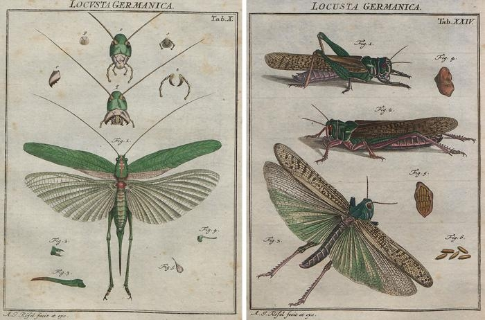 Remodelaholic | 25+ Free Incredible Insects Vintage Printable Images In Insect Wall Art (View 13 of 20)