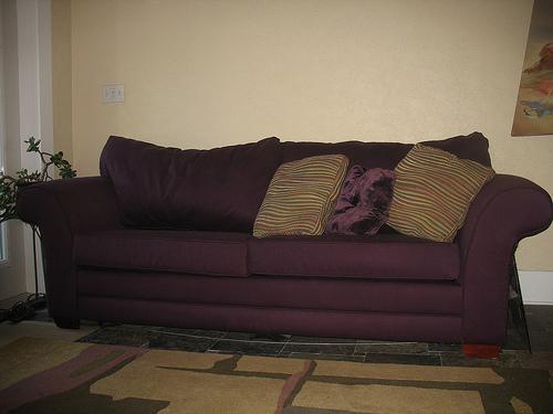 Sealy Sofa And Sealy Sleep Sofas Sofas Sofa Photos In Sealy Sofas (View 17 of 20)