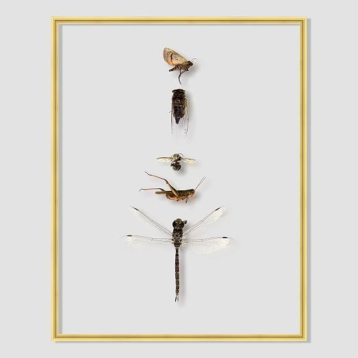 Still Acrylic Wall Art – Shadowbox Insects | West Elm With Regard To Insect Wall Art (View 6 of 20)
