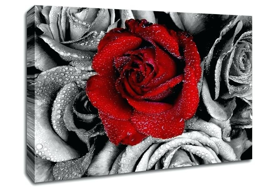Wall Art ~ White Rose Canvas Art Red Rose Canvas Art Red Rose Throughout Red Rose Wall Art (Image 18 of 20)