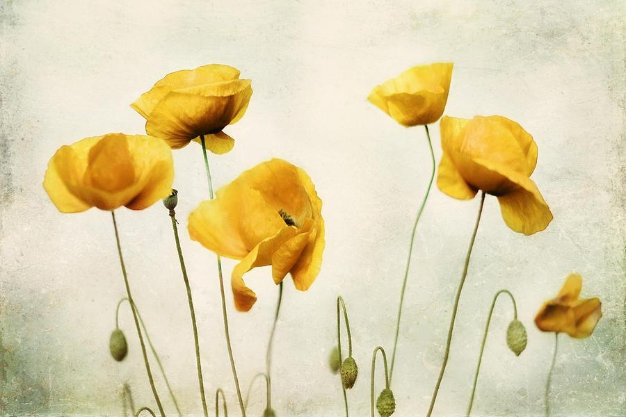 Yellow Poppy Photography – Yellow Poppies – Yellow Flowers – Olive Inside Yellow And Green Wall Art (Image 20 of 20)