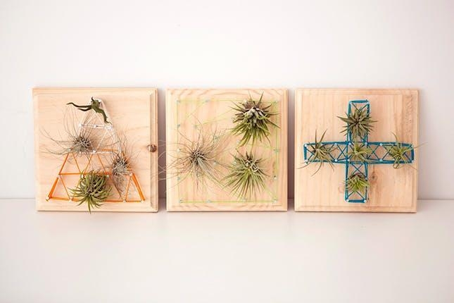 14 Ways To Decorate With Air Plants (Aka The New Succulent Inside Air Plant Wall Art (View 12 of 20)