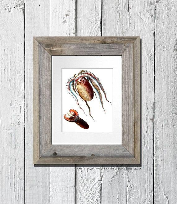 15 Best Sea Life Octopus & Squid Wall Art Prints Images On Throughout Seashell Prints Wall Art (Image 2 of 20)