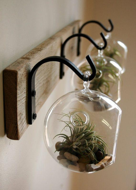 25+ Best Air Plants Ideas On Pinterest | Air Plant Display, Air For Air Plant Wall Art (View 17 of 20)