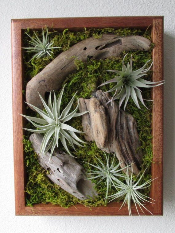 25+ Best Air Plants Ideas On Pinterest | Air Plant Display, Air In Air Plant Wall Art (View 2 of 20)
