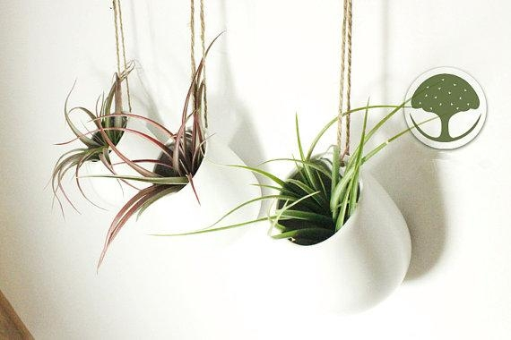 3 Or 4 In Package White Ceramic Wall Vasehanging Air Plant Throughout Air Plant Wall Art (View 8 of 20)