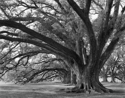 63 Best Tree Of Life Images On Pinterest | Block Prints, Mother With Live Oak Tree Wall Art (Image 3 of 20)