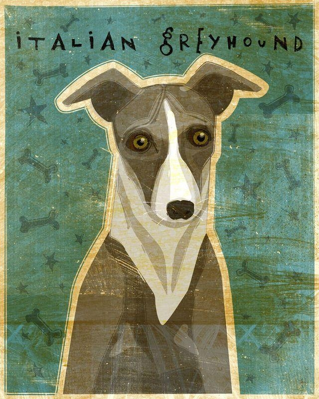 72 Best Iggies!!! (Italian Greyhounds For Ti Ti) Images On Throughout Italian Greyhound Wall Art (View 15 of 20)