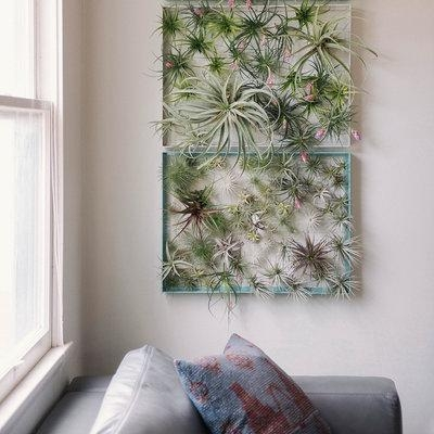 Air Plant Wall Hanging : Diy In Air Plant Wall Art (View 3 of 20)