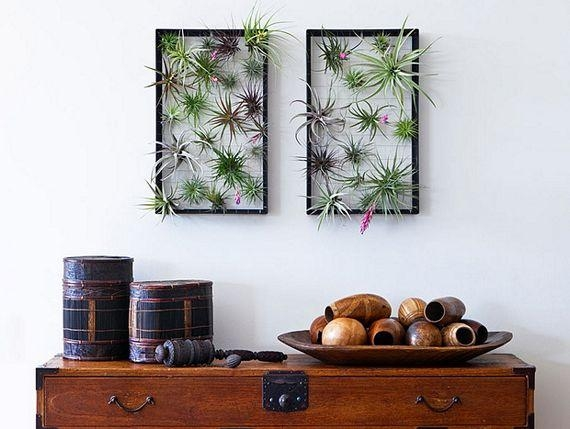 Featured Image of Air Plant Wall Art