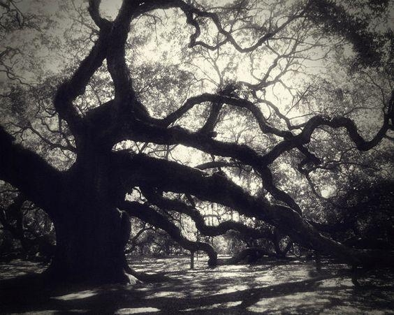 Angel Oak Photography, 8X10 Print, Live Oak, Oldest Living Tree Intended For Live Oak Tree Wall Art (Image 6 of 20)