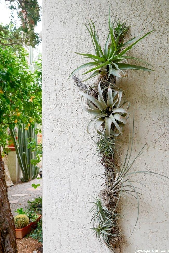 Best 25+ Air Plant Display Ideas On Pinterest | Air Plants For Air Plant Wall Art (View 13 of 20)