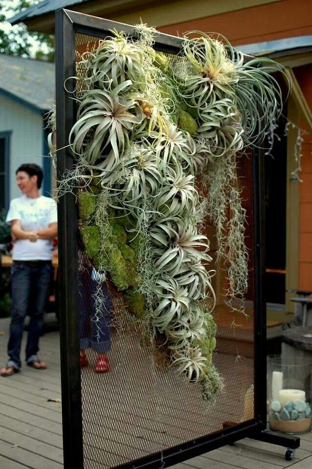 Best 25+ Hanging Air Plants Ideas On Pinterest | Hanging Air In Air Plant Wall Art (View 14 of 20)