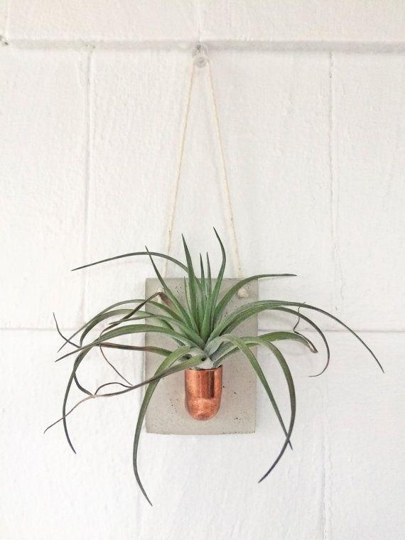 Best 25+ Hanging Air Plants Ideas On Pinterest | Hanging Air Regarding Air Plant Wall Art (View 9 of 20)
