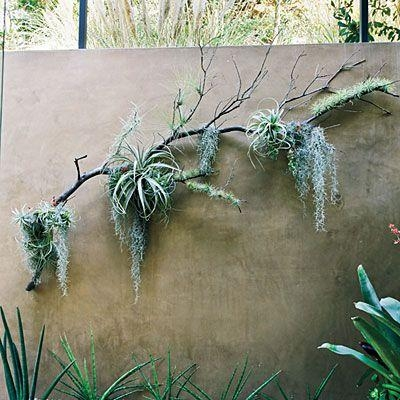 Best 25+ Hanging Air Plants Ideas On Pinterest | Hanging Air With Regard To Air Plant Wall Art (View 11 of 20)