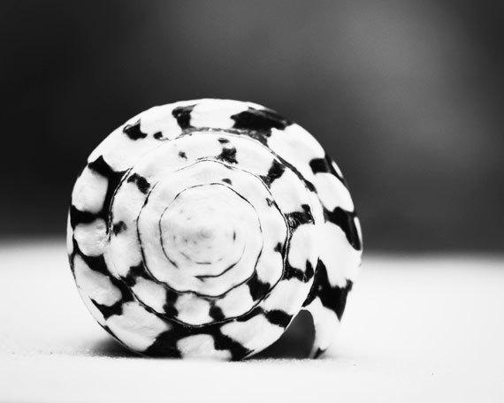 Black And White Photography Seashell Sea Shell Print Beach Pertaining To Seashell Prints Wall Art (Image 9 of 20)