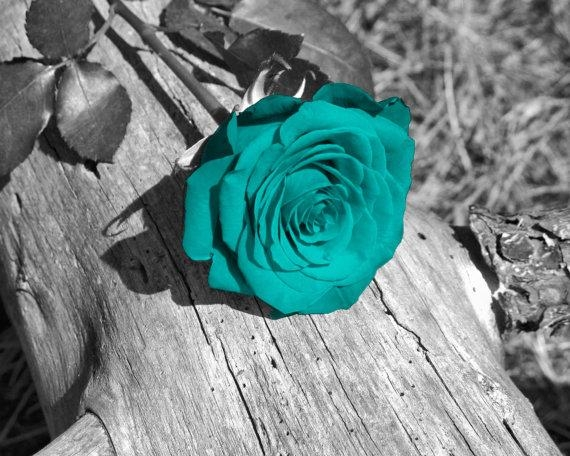 Black White Teal Wall Art Photography/rose Flower/floral In Teal And Black Wall Art (View 6 of 20)