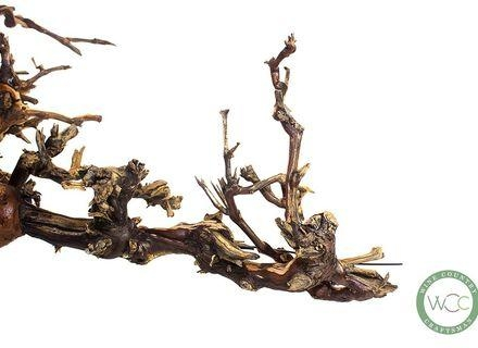 Custom Made Old Grape Vine Branch Standing Or Wall Display Art Vab Throughout Old Grape Vine Wall Art (Image 3 of 20)