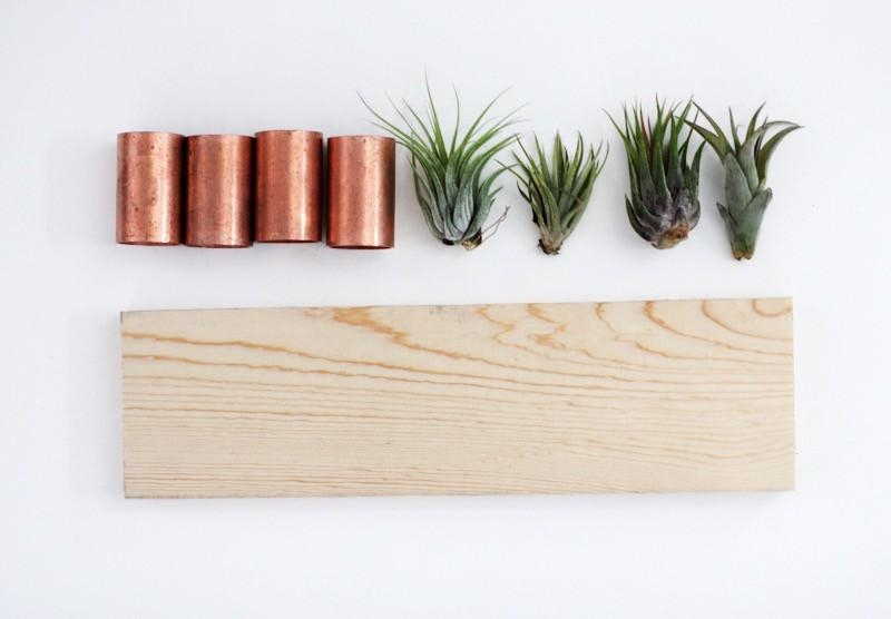 Diy Air Plant Wall Art With Air Plant Wall Art (View 7 of 20)