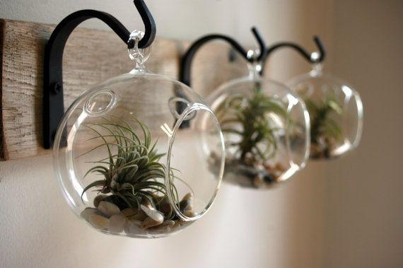 Hanging Air Plants On Wall, Image Via Etsy – Ilevel Pertaining To Air Plant Wall Art (Photo 6 of 20)