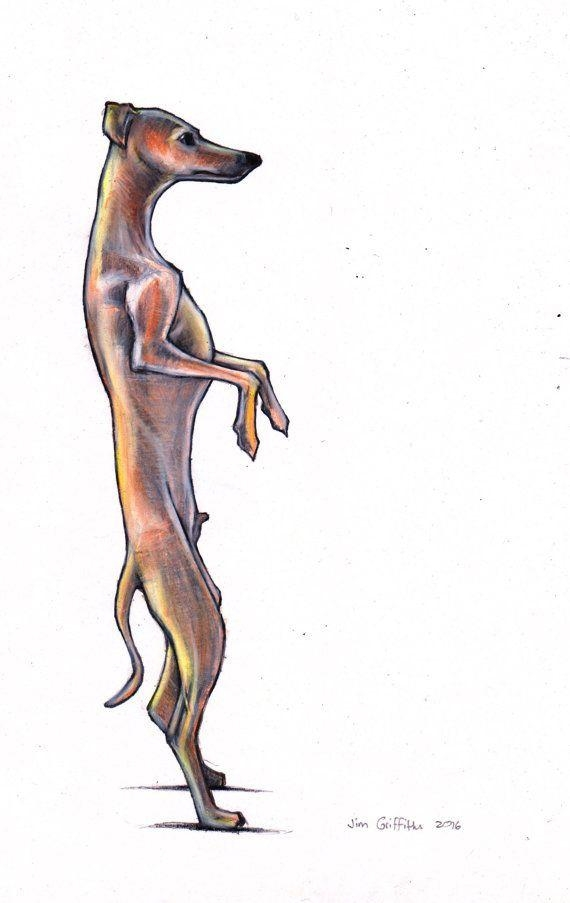 Italian Greyhound Art Print Iggy Art Imagesjimgriffithsart In Italian Greyhound Wall Art (View 5 of 20)