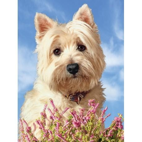 Large Westie Picture 3D Westie Wall Art  West Highland White Inside Westie Wall Art (Image 14 of 20)