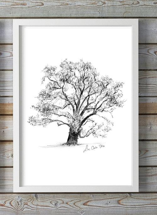 Live Oak Tree Art Tree Drawing Print Wall Art Regarding Live Oak Tree Wall Art (View 19 of 20)