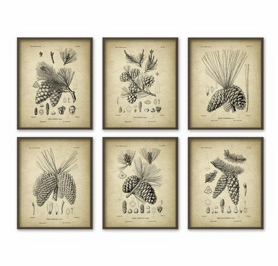 Pine Cones Wall Art Prints Set Of 6 Antique Woodland With Pine Cone Wall Art (View 6 of 20)