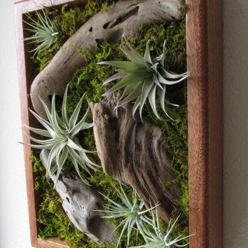 Unusual Plants That Live In The Air. And Tortoise Takeaways Within Air Plant Wall Art (Photo 20 of 20)