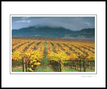 Wall Art ~ Distressed Wine Wall Valley Vineyard Metal Wall Art Set Regarding Grape Vineyard Wall Art (View 4 of 20)