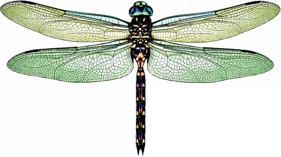 5 X 3D Dragonflies – Daintree Green – Rainforest, Wall Decor, Art Intended For Dragonfly 3D Wall Art (View 5 of 20)