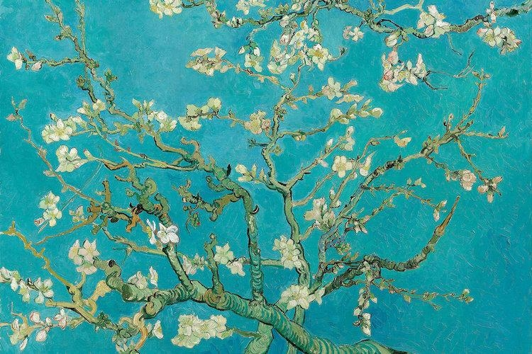 Almond Blossom, 1890 Art Printvincent Van Gogh | Icanvas For Almond Blossoms Vincent Van Gogh Wall Art (Image 3 of 20)