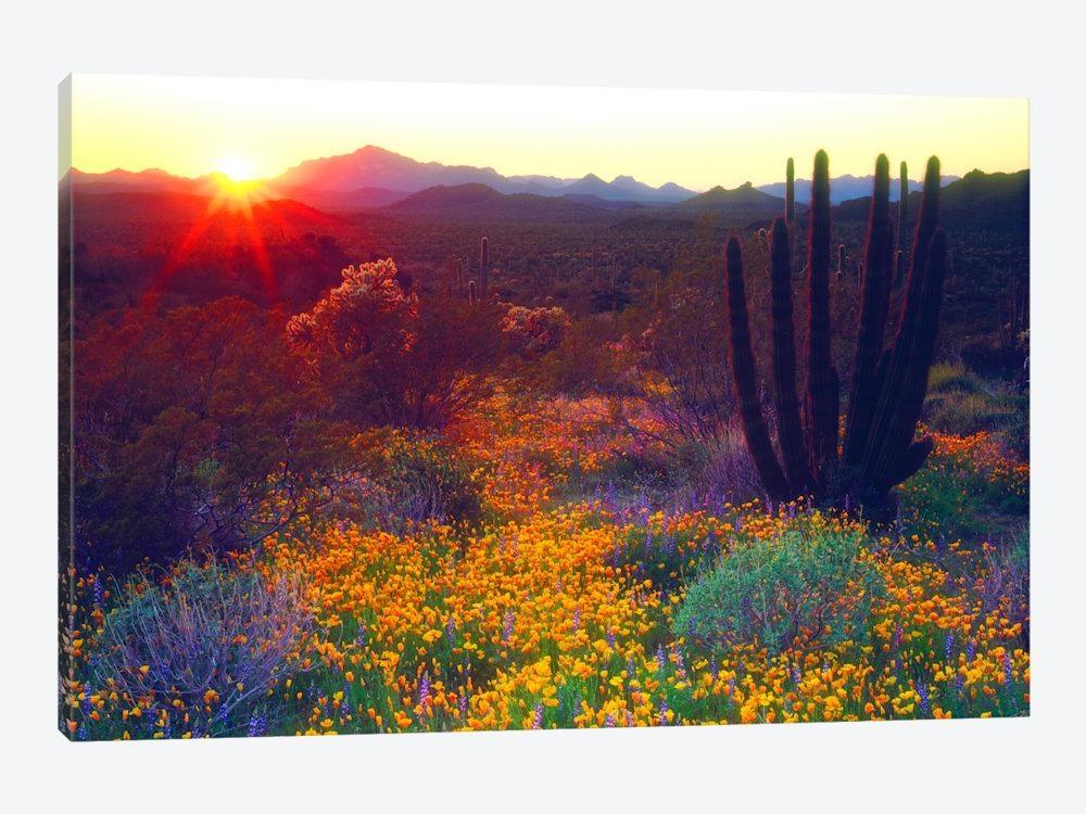 Arizona Canvas Wall Art — Icanvas With Regard To Arizona Canvas Wall Art (Image 8 of 20)