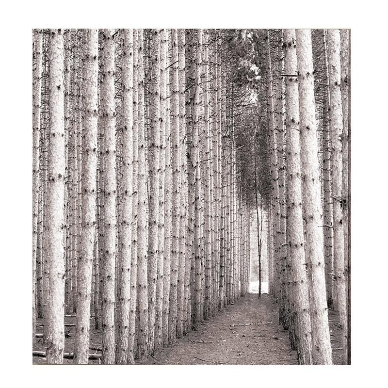 Birch Trees Canvas Print Pertaining To Jysk Canvas Wall Art (Image 2 of 20)