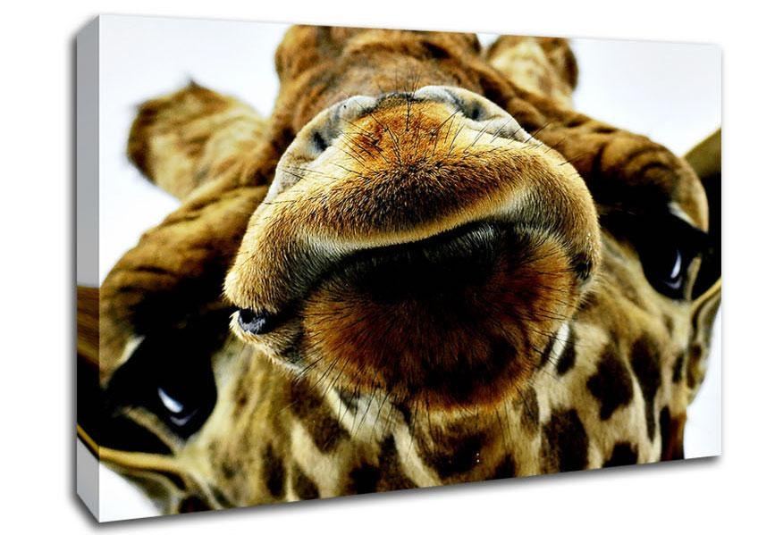 Blog Wild Life Giraffe Canvas Art Prints Throughout Giraffe Canvas Wall Art (Image 5 of 20)