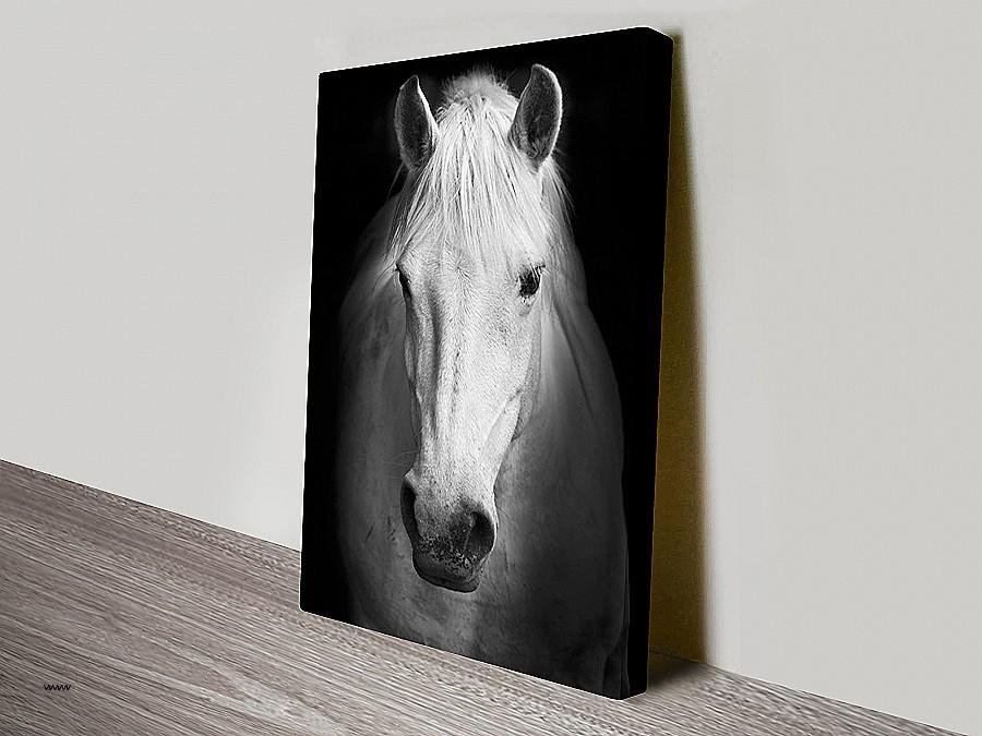 Cheap Black And White Wall Art Inspirational White Horse Black And For Canvas Wall Art Of Perth (Image 14 of 20)