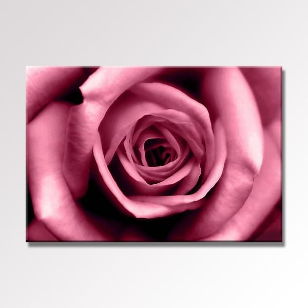 Deep Pink Soft Rose Canvas Wall Art 30X20 76X52Cm Pertaining To Roses Canvas Wall Art (View 13 of 20)