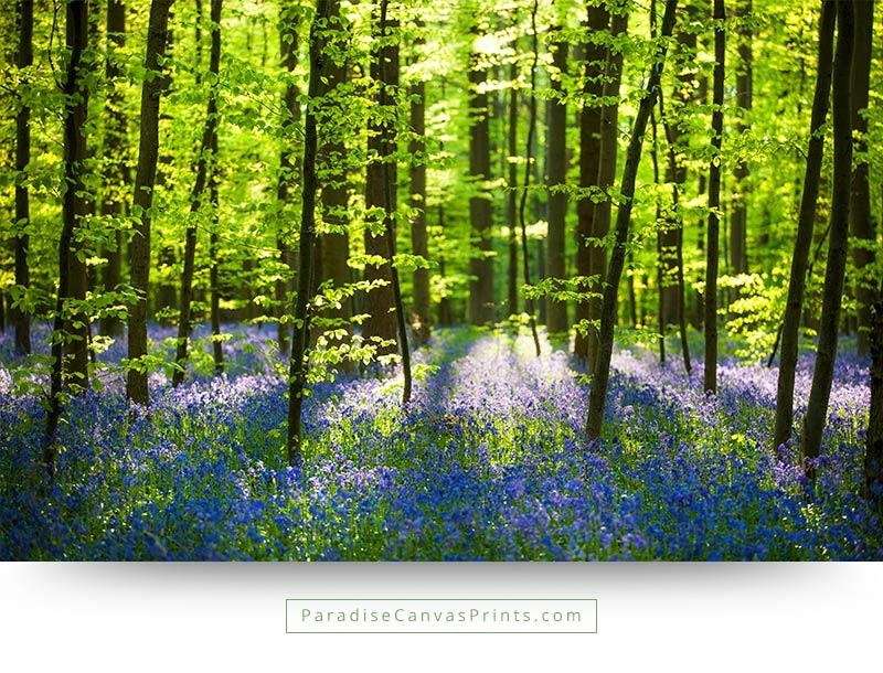 Forest Wildflowers With Bright Sunlight – Wall Art, Canvas Print Pertaining To Landscape Canvas Wall Art (Image 13 of 20)