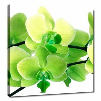 Lime Green | Lime Green Canvas Wall Pictures Floral Art Intended For Lime Green Canvas Wall Art (Image 8 of 20)
