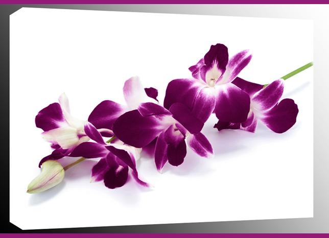 Orchid Spray On White Single Canvas Wall Art 47 X 32 Inch 119 X 82 Cm In Orchid Canvas Wall Art (Image 13 of 20)