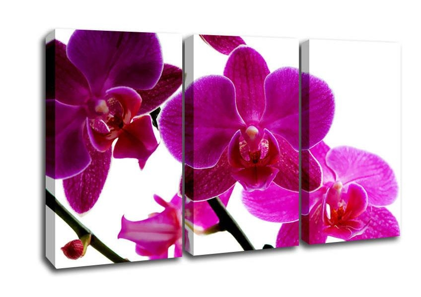 Pink Orchid Flowers 3 Panel Canvas 3 Panel Set Canvas Throughout Orchid Canvas Wall Art (Photo 11 of 20)