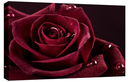 Red Rose Canvas Wall Art 30X20 A1 76X52Cm With Regard To Roses Canvas Wall Art (View 11 of 20)