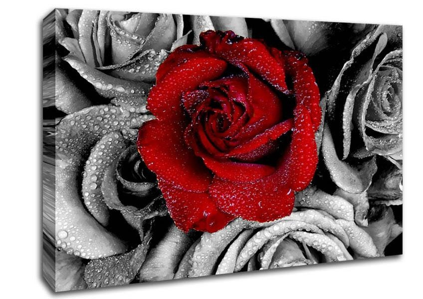 Red Rose On A Sea Of B~W Flowers Canvas Stretched Canvas For Roses Canvas Wall Art (View 19 of 20)
